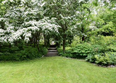 Dogwood trees at the Wakefield Estate in Milton, Massachusetts